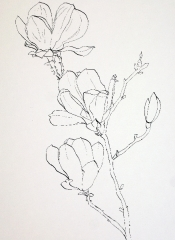 pink-magnolia-pen-and-ink-sketch-ready-for-watercolor-wash