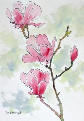 pink-magnolias-flower-pen-and-ink
