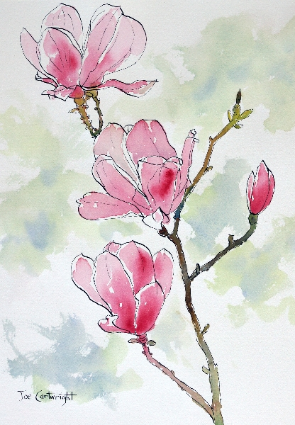Drawing pink magnolia flowers pen and ink plus watercolor wash pink magnolias flower pen and ink mightylinksfo
