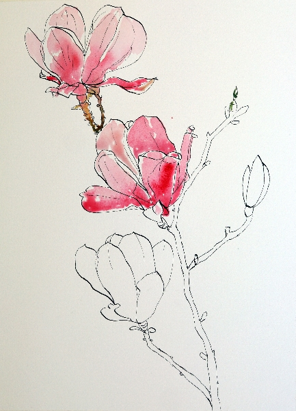 Line Drawing With Watercolor : Pen and ink drawing with watercolor wash