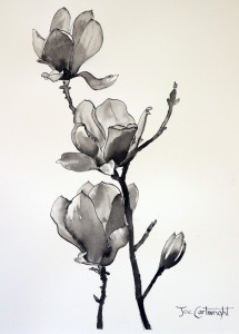 Pen and ink drawing of Magnolias by Joe Cartwright