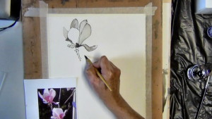 I add the stem to the Magnolia flower using my pen, ink and brush.
